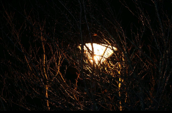 Votre vie peut ressembler à cette lumière parmi les arbres si vous accordez de l'importance aux relations humaines de votre vie.